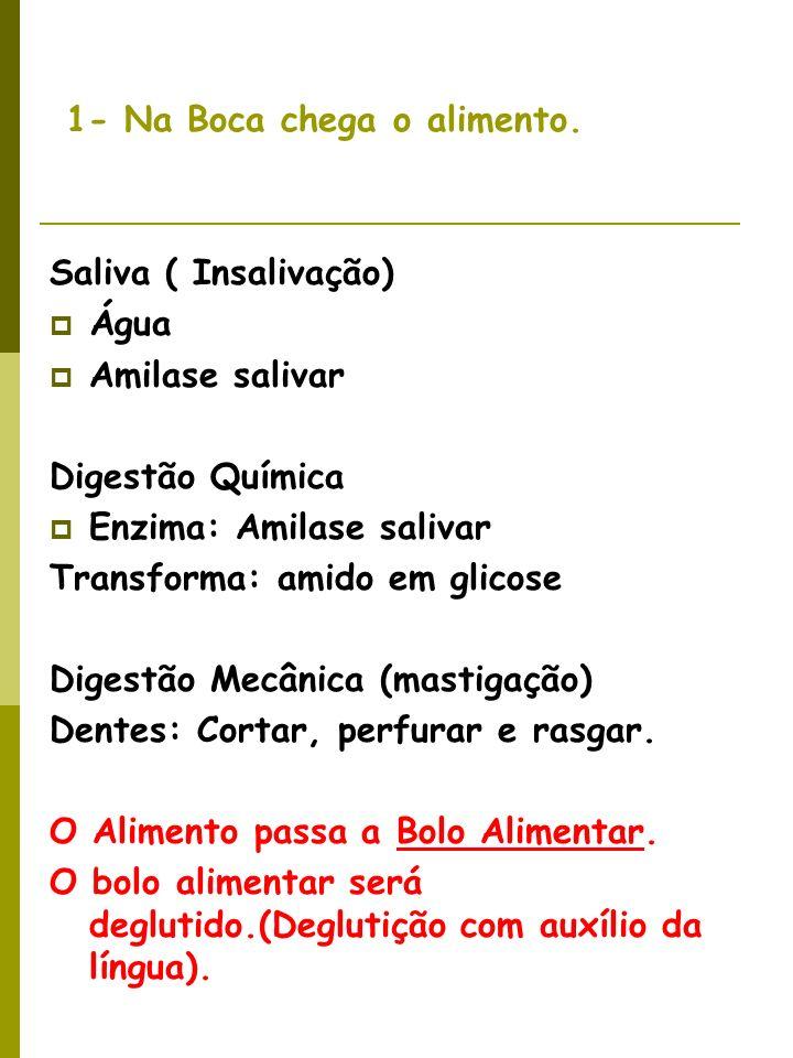Faringe e Esôfago Movimentos Peristálticos- realizados pelo tecido muscular liso.