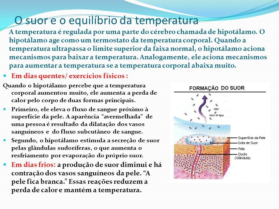 O suor e o equilíbrio da temperatura A temperatura é regulada por uma parte do cérebro chamada de hipotálamo. O hipotálamo age como um termostato da t