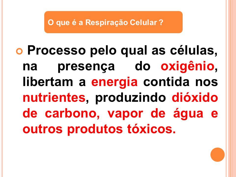 Processo pelo qual as células, na presença do oxigênio, libertam a energia contida nos nutrientes, produzindo dióxido de carbono, vapor de água e outr