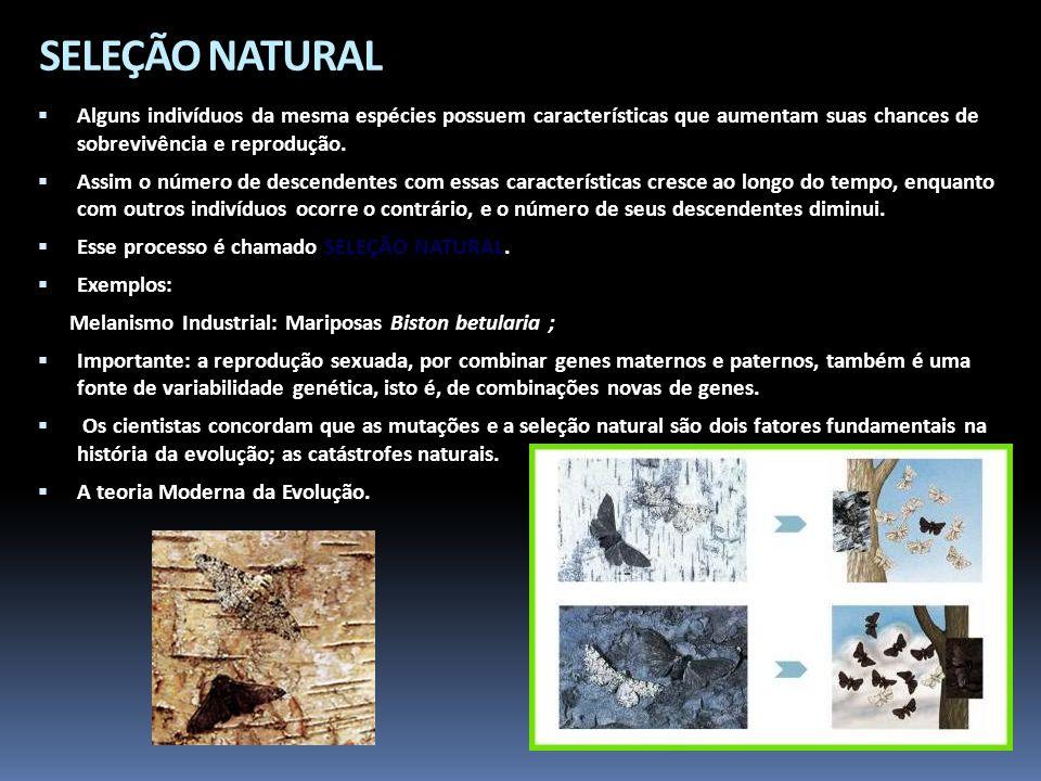SELEÇÃO NATURAL Alguns indivíduos da mesma espécies possuem características que aumentam suas chances de sobrevivência e reprodução. Assim o número de
