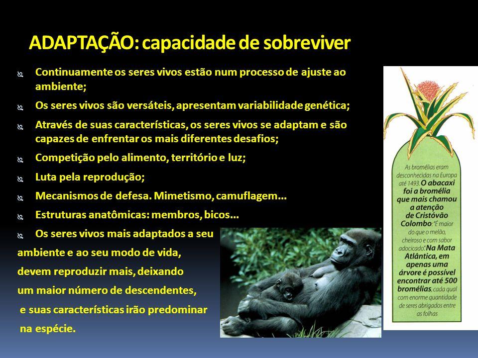 ADAPTAÇÃO: capacidade de sobreviver Continuamente os seres vivos estão num processo de ajuste ao ambiente; Os seres vivos são versáteis, apresentam va