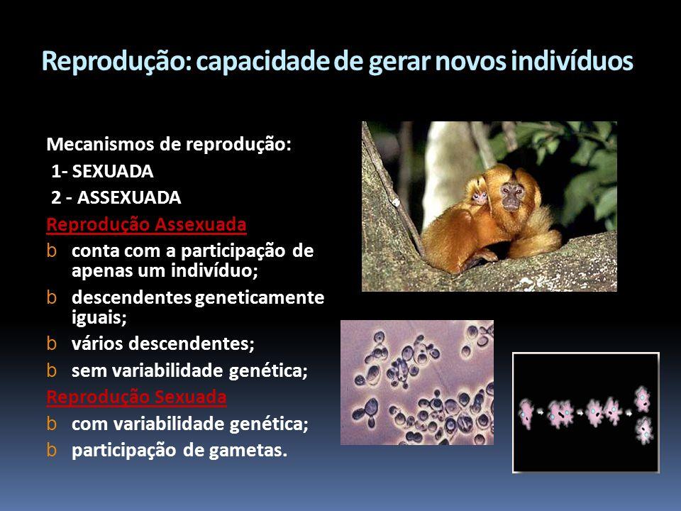 Reprodução: capacidade de gerar novos indivíduos Mecanismos de reprodução: 1- SEXUADA 2 - ASSEXUADA Reprodução Assexuada b conta com a participação de