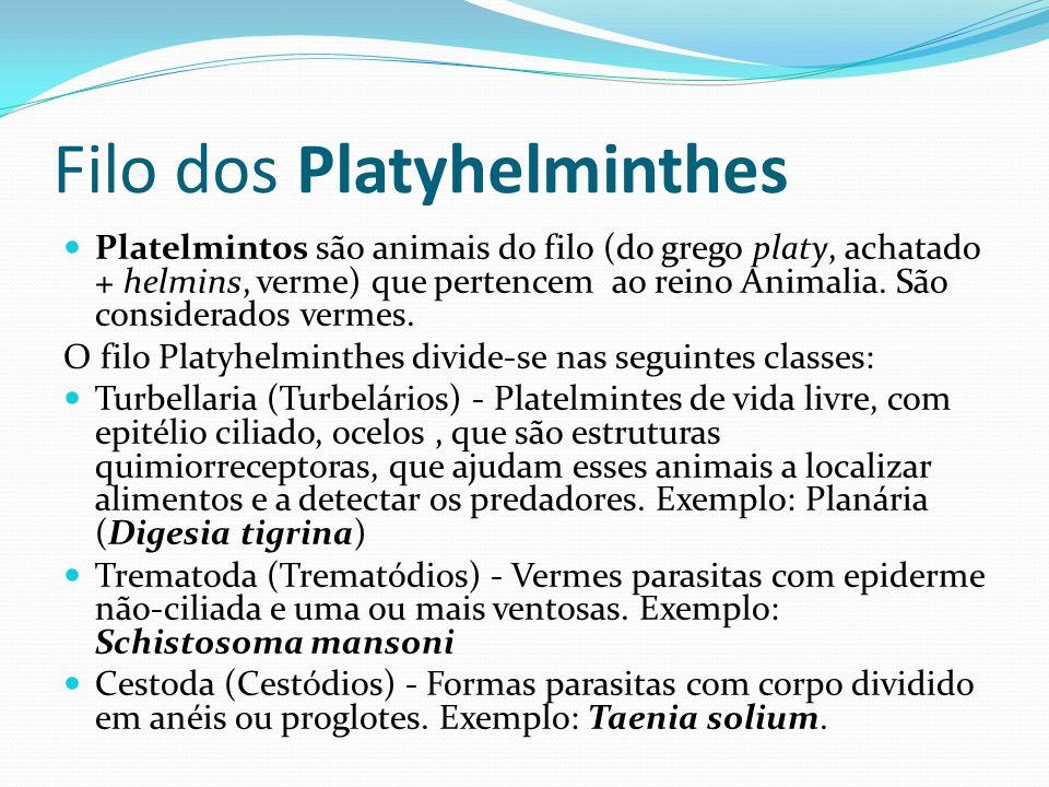 Filo dos Platyhelminthes Platelmintos são animais do filo (do grego platy, achatado + helmins, verme) que pertencem ao reino Animalia. São considerado