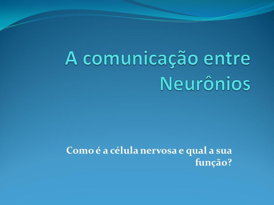 Como é a célula nervosa e qual a sua função?