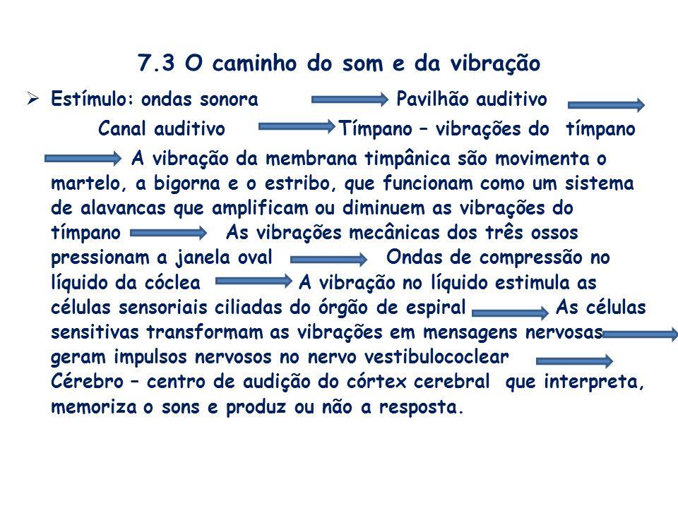 7.3 O caminho do som e da vibração Estímulo: ondas sonora Pavilhão auditivo Canal auditivo Tímpano – vibrações do tímpano A vibração da membrana timpâ