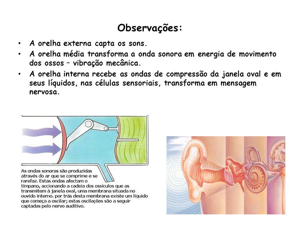 Observações: A orelha externa capta os sons. A orelha média transforma a onda sonora em energia de movimento dos ossos – vibração mecânica. A orelha i