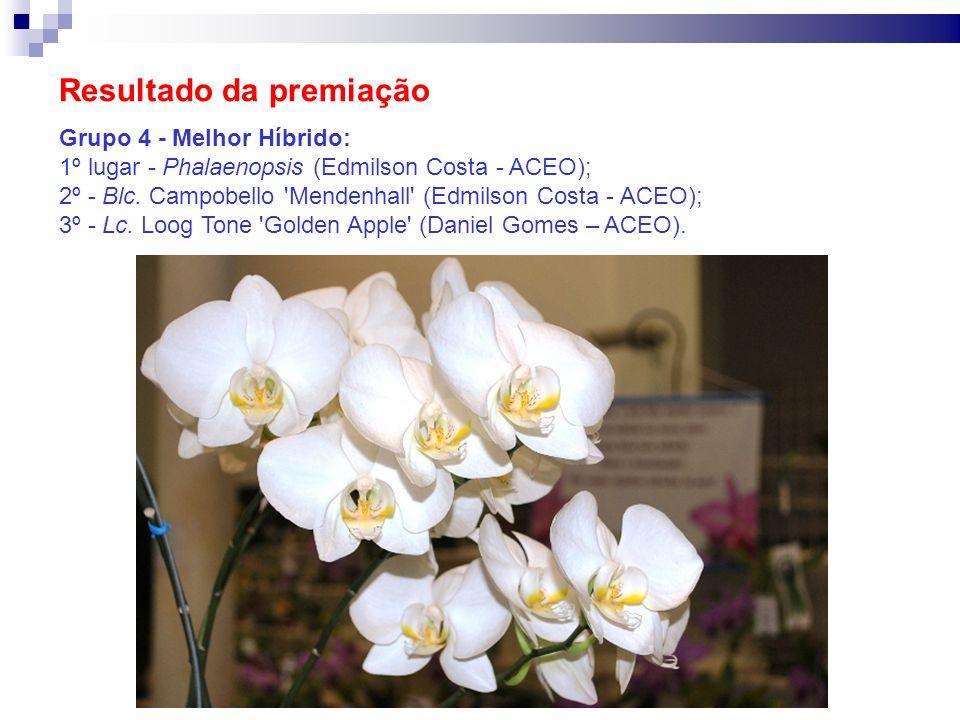 Resultado da premiação Grupo 4 - Melhor Híbrido: 1º lugar - Phalaenopsis (Edmilson Costa - ACEO); 2º - Blc. Campobello 'Mendenhall' (Edmilson Costa -