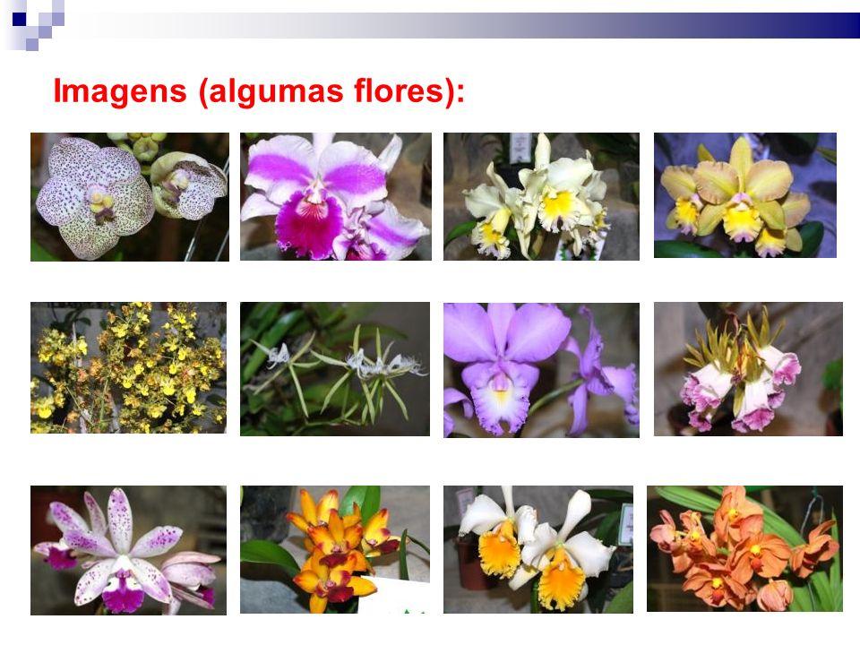 Imagens (algumas flores):