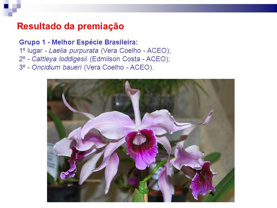 Resultado da premiação Grupo 1 - Melhor Espécie Brasileira: 1º lugar - Laelia purpurata (Vera Coelho - ACEO); 2º - Cattleya loddigesii (Edmilson Costa