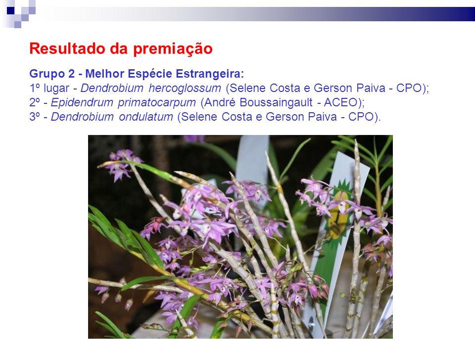 Resultado da premiação Grupo 2 - Melhor Espécie Estrangeira: 1º lugar - Dendrobium hercoglossum (Selene Costa e Gerson Paiva - CPO); 2º - Epidendrum p