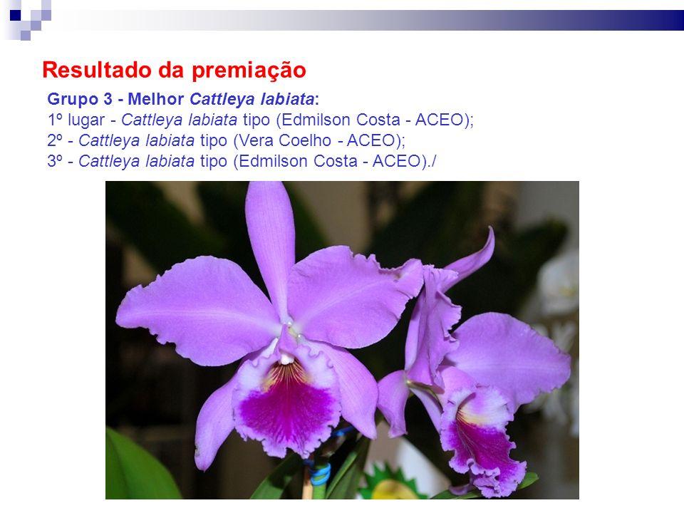 Resultado da premiação Grupo 3 - Melhor Cattleya labiata: 1º lugar - Cattleya labiata tipo (Edmilson Costa - ACEO); 2º - Cattleya labiata tipo (Vera C
