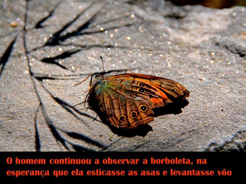 O homem continuou a observar a borboleta, na esperança que ela esticasse as asas e levantasse vôo