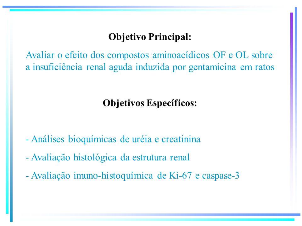 Objetivo Principal: Avaliar o efeito dos compostos aminoacídicos OF e OL sobre a insuficiência renal aguda induzida por gentamicina em ratos Objetivos