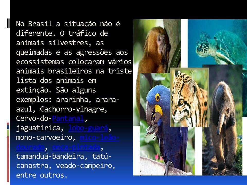 No Brasil a situação não é diferente. O tráfico de animais silvestres, as queimadas e as agressões aos ecossistemas colocaram vários animais brasileir