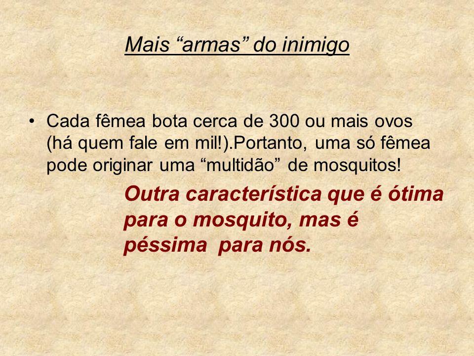 Mais armas do inimigo Cada fêmea bota cerca de 300 ou mais ovos (há quem fale em mil!).Portanto, uma só fêmea pode originar uma multidão de mosquitos!