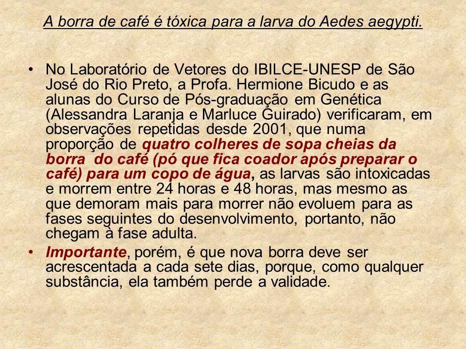 A borra de café é tóxica para a larva do Aedes aegypti. No Laboratório de Vetores do IBILCE-UNESP de São José do Rio Preto, a Profa. Hermione Bicudo e