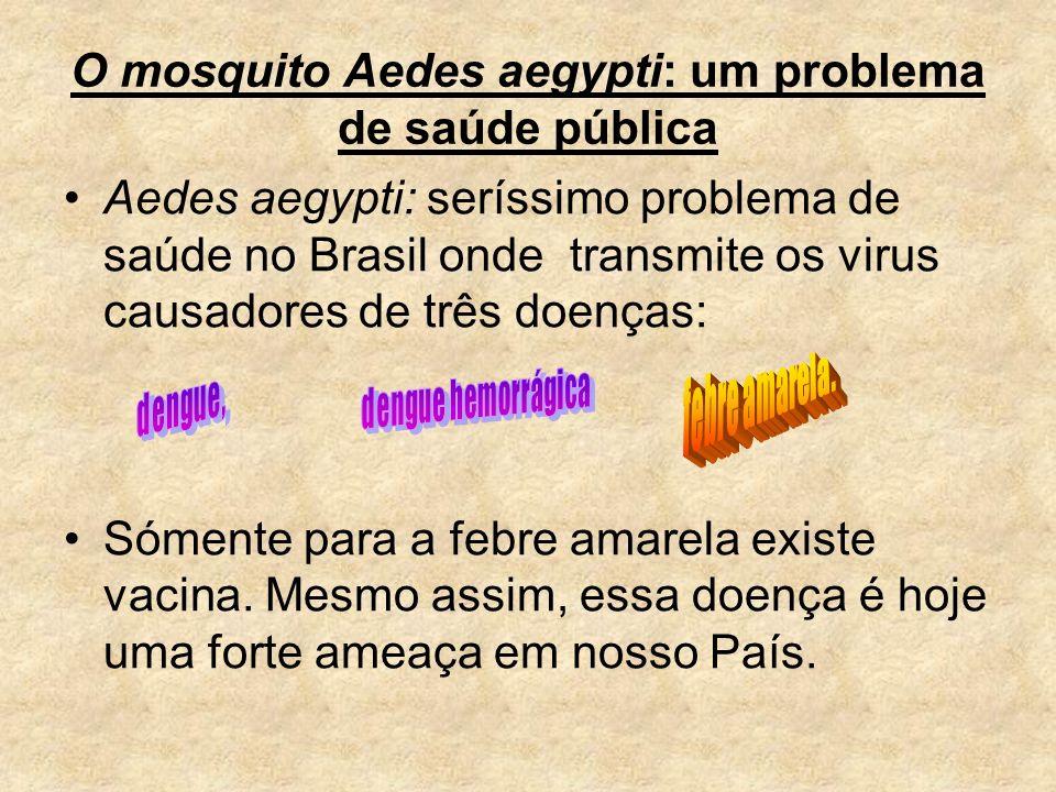 O mosquito Aedes aegypti: um problema de saúde pública Aedes aegypti: seríssimo problema de saúde no Brasil onde transmite os virus causadores de três