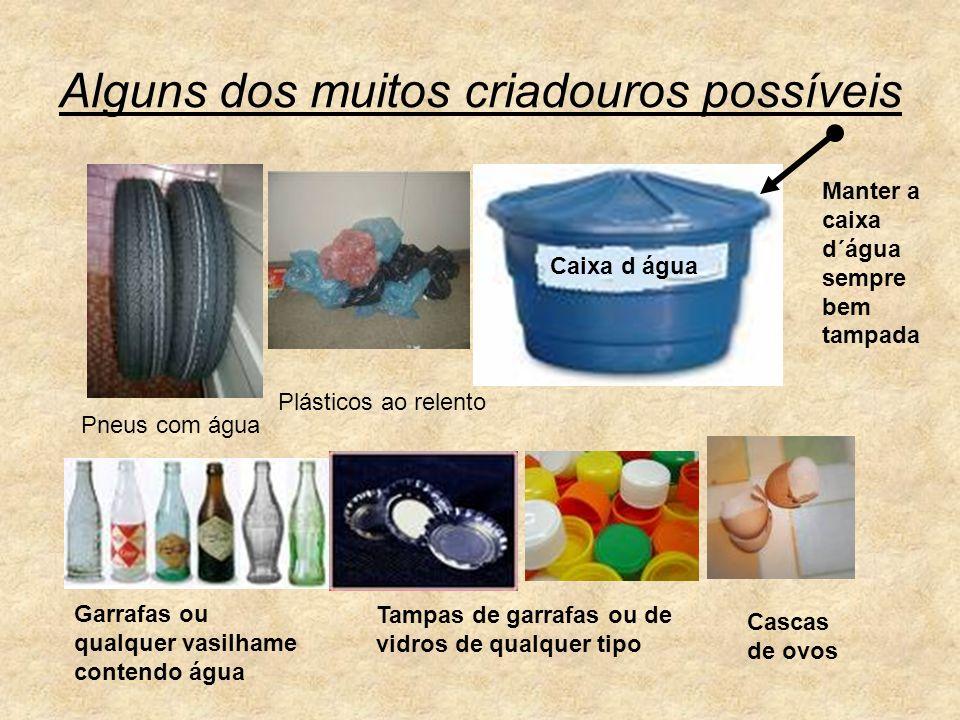 Alguns dos muitos criadouros possíveis Pneus com água Plásticos ao relento Garrafas ou qualquer vasilhame contendo água Tampas de garrafas ou de vidro