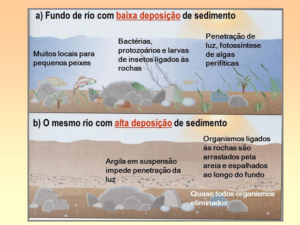 a) Fundo de rio com baixa deposição de sedimento b) O mesmo rio com alta deposição de sedimento Muitos locais para pequenos peixes Bactérias, protozoá