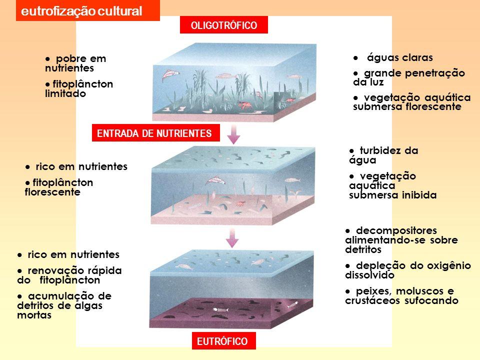 eutrofização cultural OLIGOTRÓFICO EUTRÓFICO pobre em nutrientes fitoplâncton limitado águas claras grande penetração da luz vegetação aquática submer