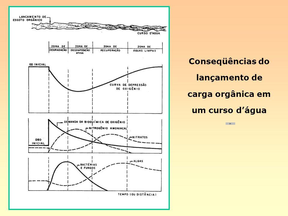 Conseqüências do lançamento de carga orgânica em um curso dágua