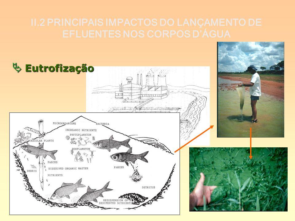 II.2 PRINCIPAIS IMPACTOS DO LANÇAMENTO DE EFLUENTES NOS CORPOS DÁGUA Eutrofização Eutrofização