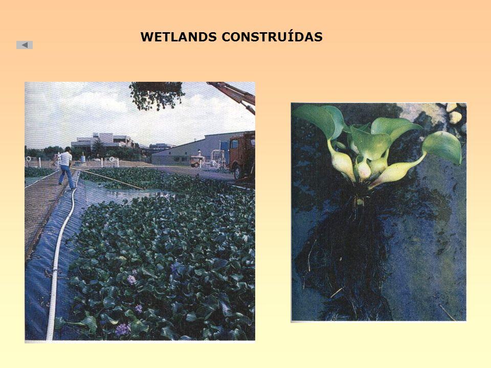 WETLANDS CONSTRUÍDAS