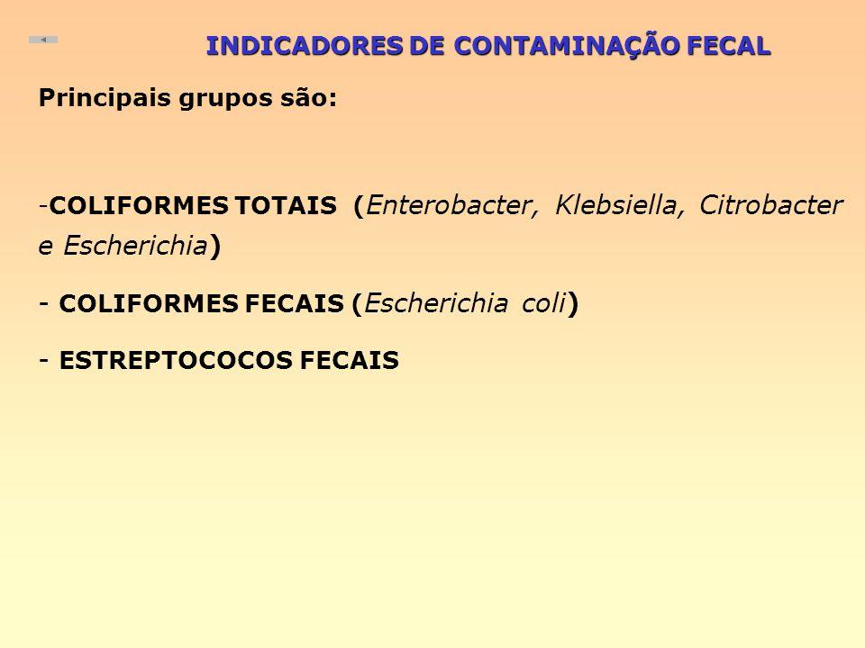 INDICADORES DE CONTAMINAÇÃO FECAL Principais grupos são: -COLIFORMES TOTAIS ( Enterobacter, Klebsiella, Citrobacter e Escherichia) - COLIFORMES FECAIS