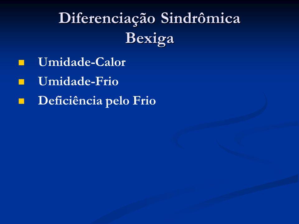 Diferenciação Sindrômica Bexiga Umidade-Calor Umidade-Frio Deficiência pelo Frio