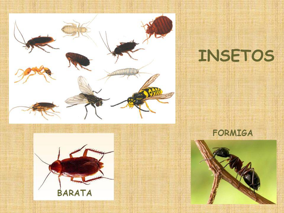 INSETOS FORMIGA BARATA
