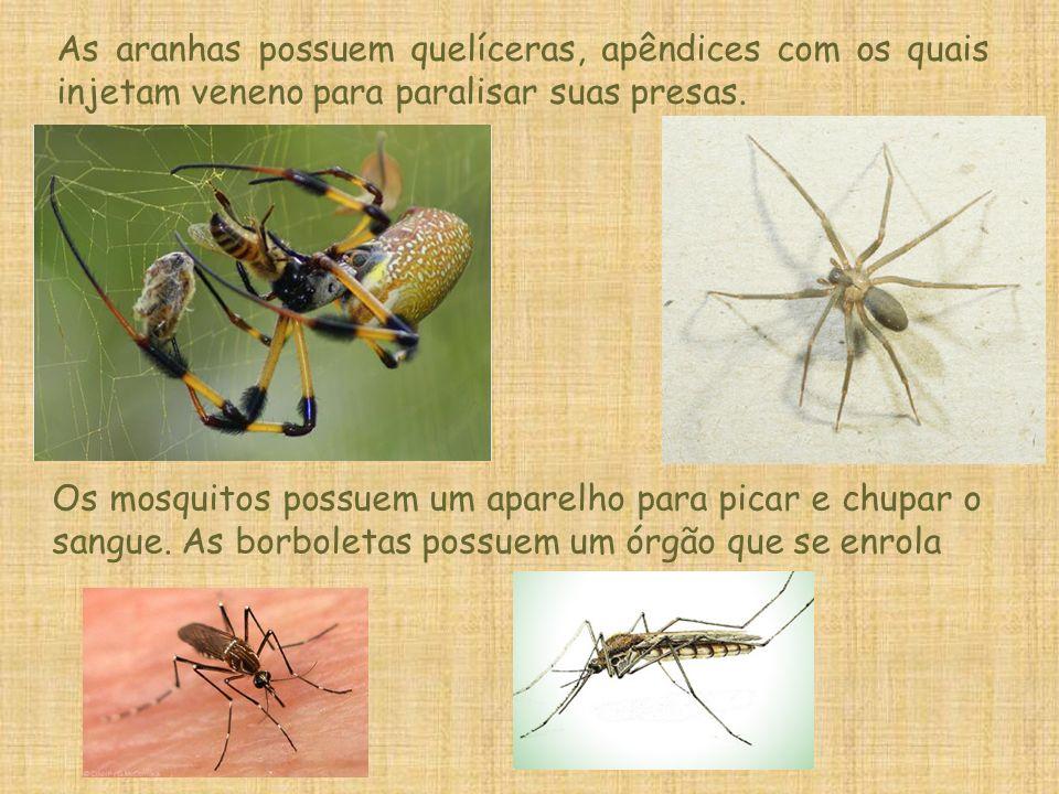 As aranhas possuem quelíceras, apêndices com os quais injetam veneno para paralisar suas presas. Os mosquitos possuem um aparelho para picar e chupar