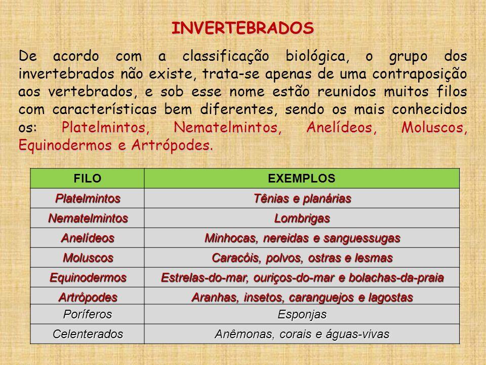 INVERTEBRADOS Platelmintos, Nematelmintos, Anelídeos, Moluscos, Equinodermos e Artrópodes. De acordo com a classificação biológica, o grupo dos invert