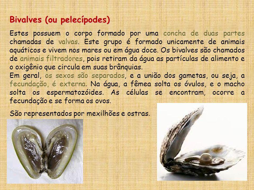 Bivalves (ou pelecípodes) Estes possuem o corpo formado por uma concha de duas partes chamadas de valvas. Este grupo é formado unicamente de animais a