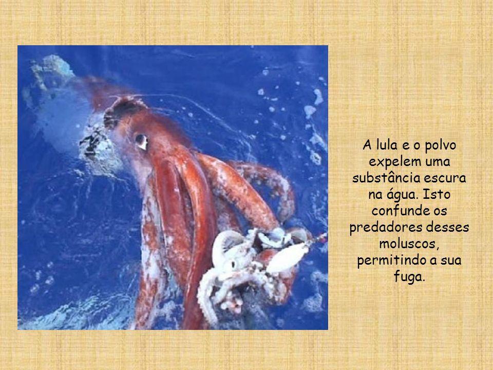 A lula e o polvo expelem uma substância escura na água. Isto confunde os predadores desses moluscos, permitindo a sua fuga.