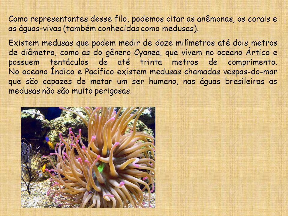 Como representantes desse filo, podemos citar as anêmonas, os corais e as águas-vivas (também conhecidas como medusas). Existem medusas que podem medi