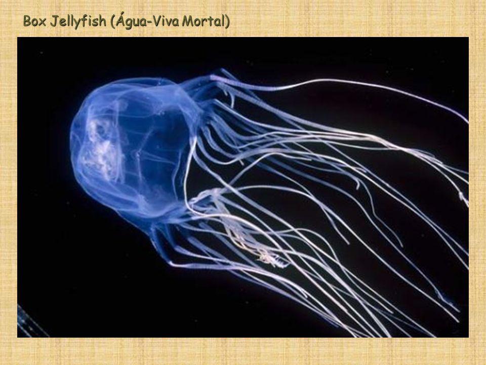 Box Jellyfish (Água-Viva Mortal)