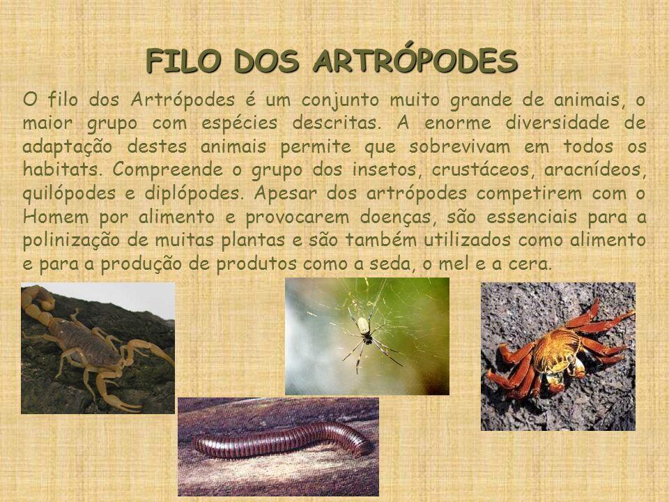 FILO DOS ARTRÓPODES O filo dos Artrópodes é um conjunto muito grande de animais, o maior grupo com espécies descritas. A enorme diversidade de adaptaç