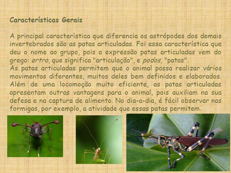 Características Gerais A principal característica que diferencia os astrópodes dos demais invertebrados são as patas articuladas. Foi essa característ