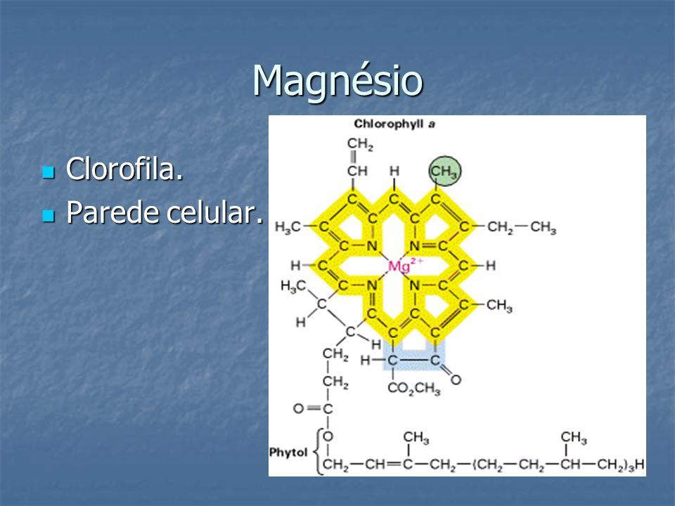 Magnésio Clorofila. Parede celular.