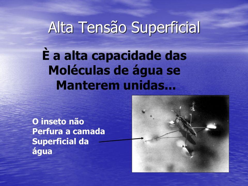 Alta Tensão Superficial È a alta capacidade das Moléculas de água se Manterem unidas... O inseto não Perfura a camada Superficial da água