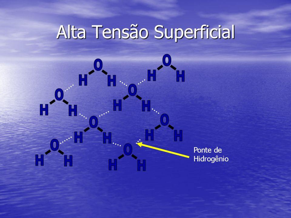 Alta Tensão Superficial Ponte de Hidrogênio