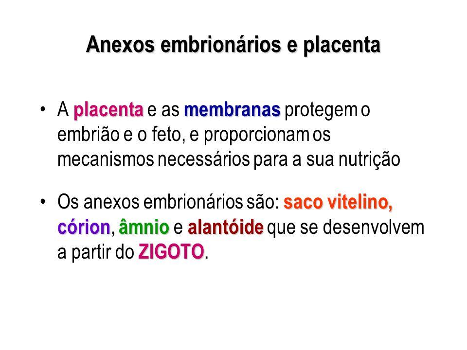 Anexos embrionários e placenta placentamembranasA placenta e as membranas protegem o embrião e o feto, e proporcionam os mecanismos necessários para a