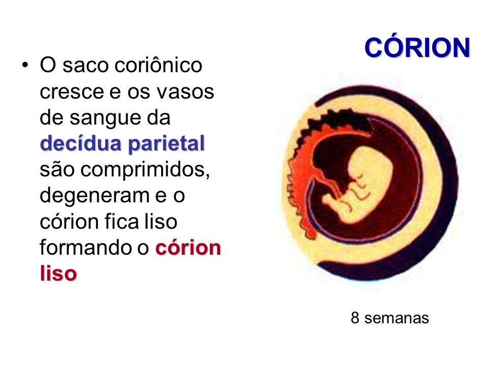CÓRION decídua parietal córion lisoO saco coriônico cresce e os vasos de sangue da decídua parietal são comprimidos, degeneram e o córion fica liso fo