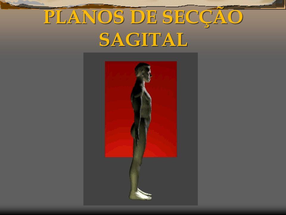PLANOS DE SECÇÃO SAGITAL