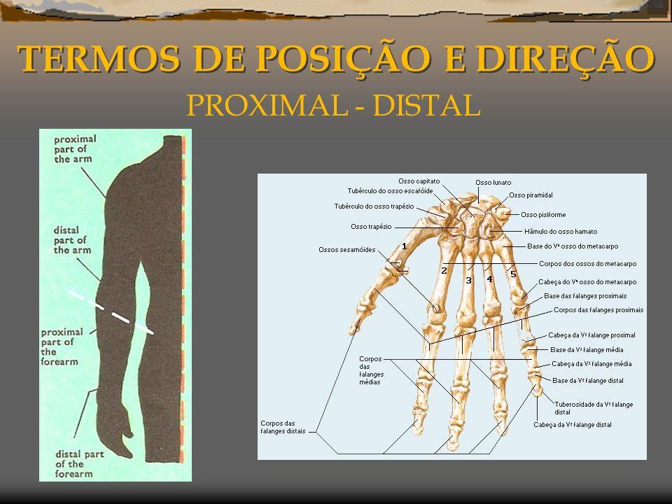 TERMOS DE POSIÇÃO E DIREÇÃO PROXIMAL - DISTAL
