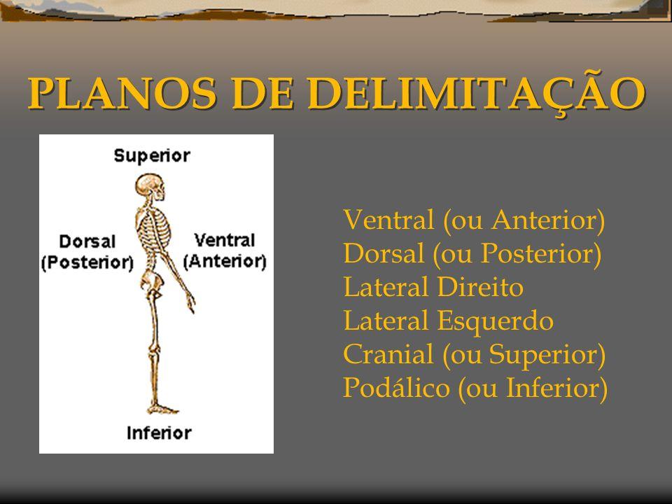 PLANOS DE DELIMITAÇÃO Ventral (ou Anterior) Dorsal (ou Posterior) Lateral Direito Lateral Esquerdo Cranial (ou Superior) Podálico (ou Inferior)