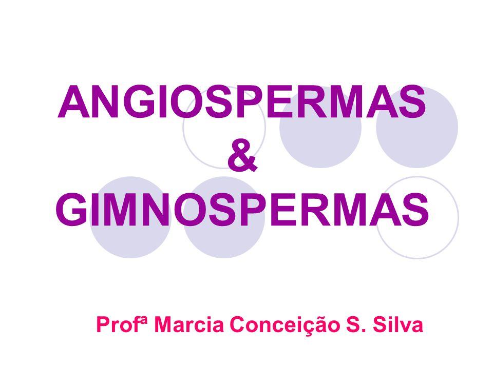 ANGIOSPERMAS & GIMNOSPERMAS Profª Marcia Conceição S. Silva
