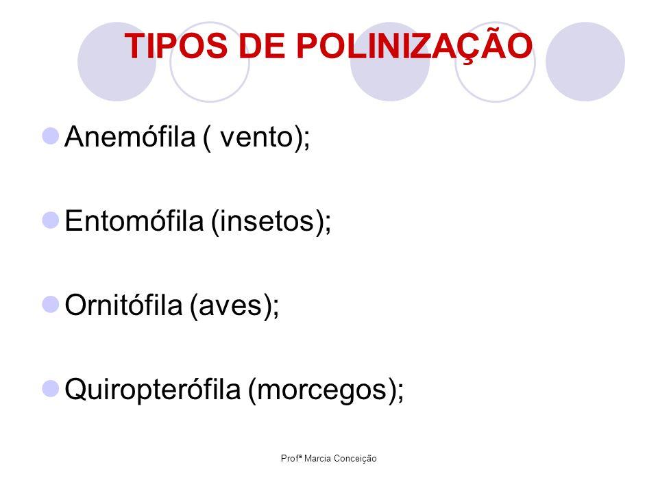 Profª Marcia Conceição TIPOS DE POLINIZAÇÃO Anemófila ( vento); Entomófila (insetos); Ornitófila (aves); Quiropterófila (morcegos);