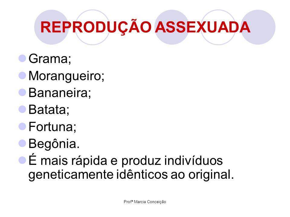 Profª Marcia Conceição REPRODUÇÃO ASSEXUADA Grama; Morangueiro; Bananeira; Batata; Fortuna; Begônia. É mais rápida e produz indivíduos geneticamente i