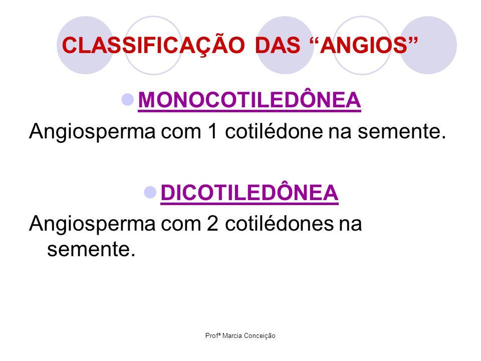 Profª Marcia Conceição CLASSIFICAÇÃO DAS ANGIOS MONOCOTILEDÔNEA Angiosperma com 1 cotilédone na semente. DICOTILEDÔNEA Angiosperma com 2 cotilédones n